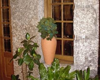 Casa Pancada