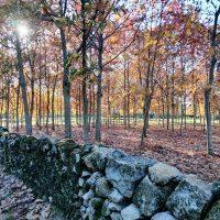 Galeria de Fotos - A Serra da Cabreira e o outono